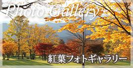 home_bnr_kouyou2019